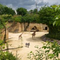Le Bioparc Zoo de Doué la Fontaine