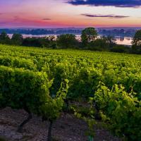 A la découverte du vignoble d'Anjou