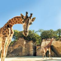 Le Bioparc Zoo de Doué-la-Fontaine