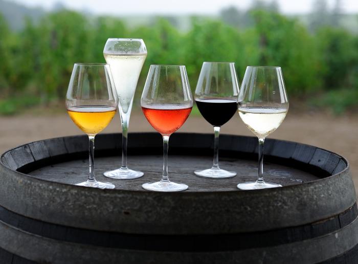 Les vins et cépages de l'Anjou