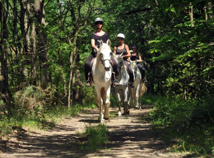Randonnées équestres accompagnées
