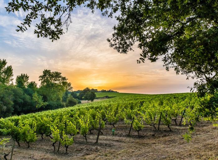 Douces nuits au coeur des vignes