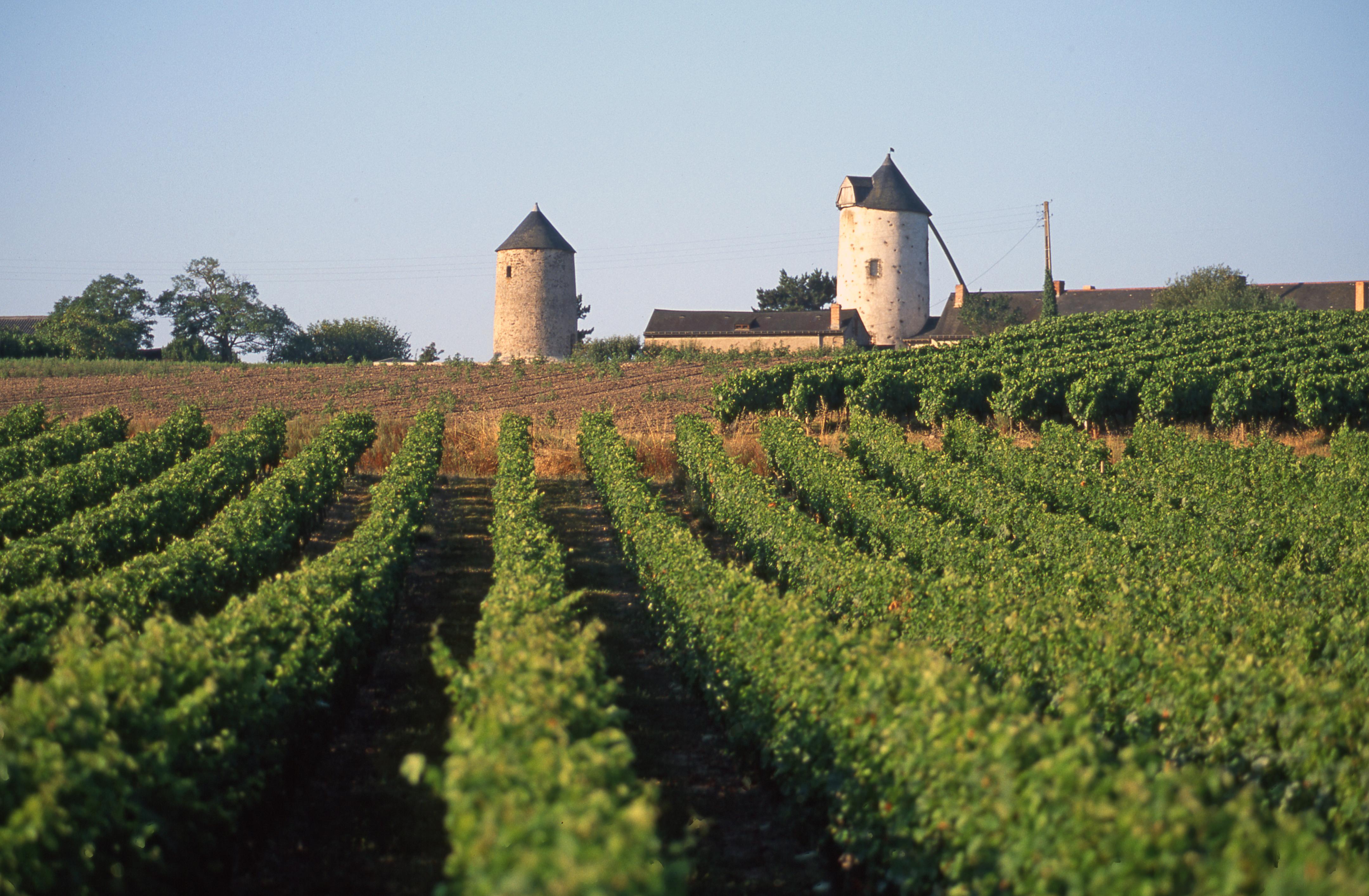 Couleur De Pierre Chalonnes Sur Loire territoire de l'anjou en val de loire